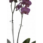Tuteur Tuteur Wilfried Allyn Design Art Floral 19,00 €19,00 €